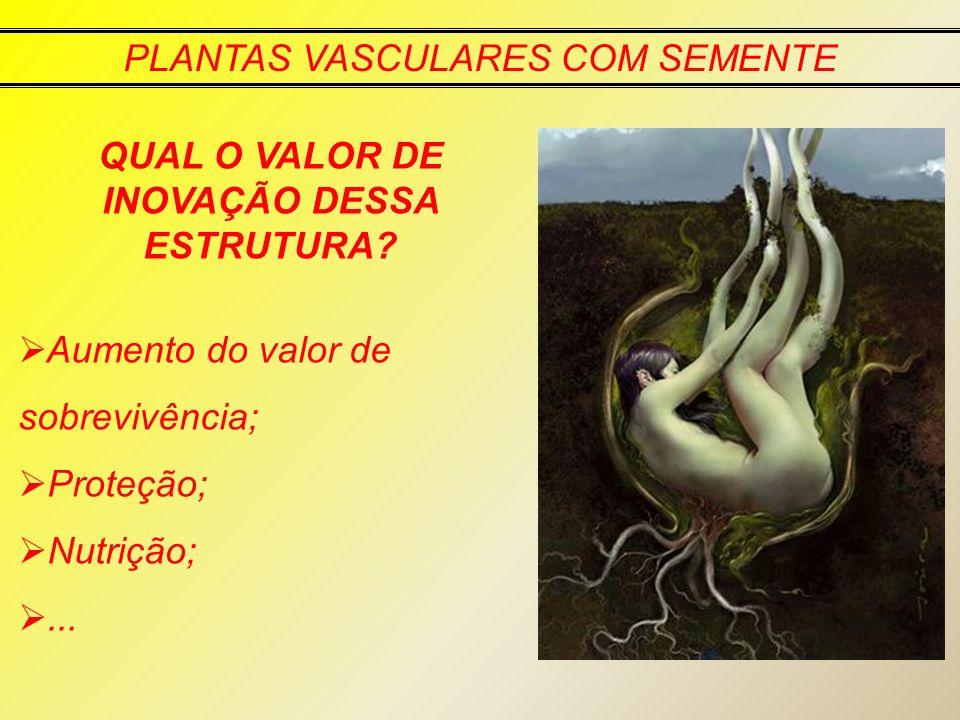 PLANTAS VASCULARES COM SEMENTE QUAL O VALOR DE INOVAÇÃO DESSA ESTRUTURA? Aumento do valor de sobrevivência; Proteção; Nutrição;...