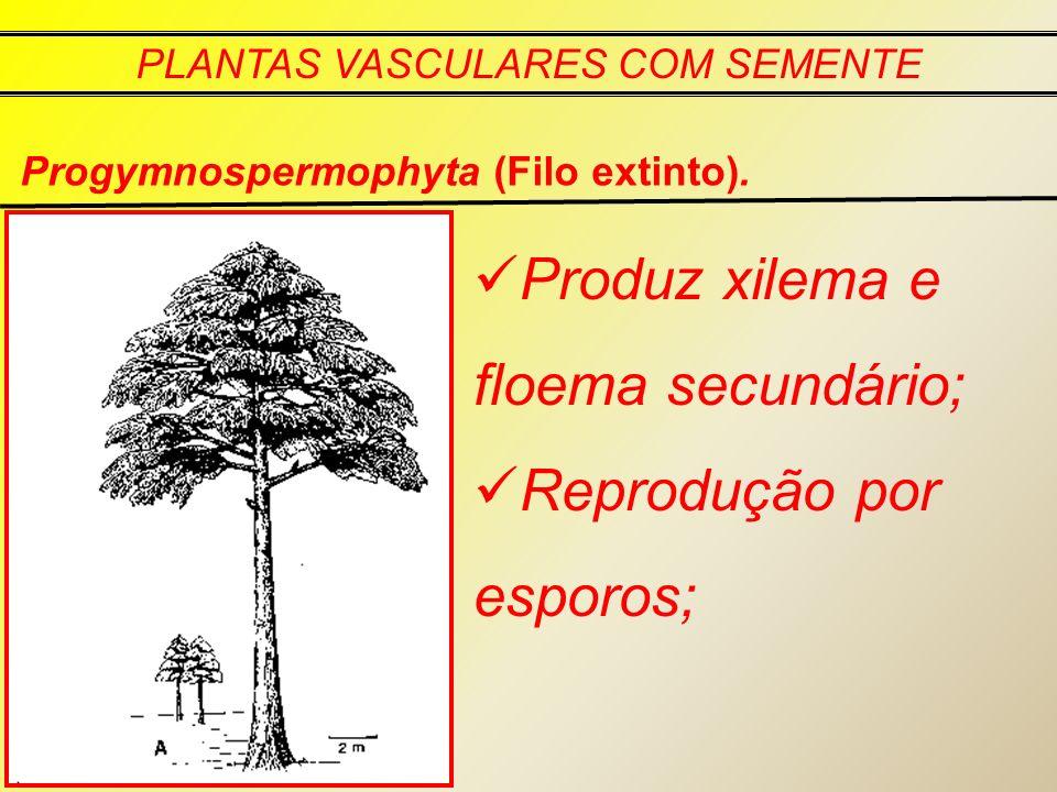 PLANTAS VASCULARES COM SEMENTE Progymnospermophyta (Filo extinto). Produz xilema e floema secundário; Reprodução por esporos;
