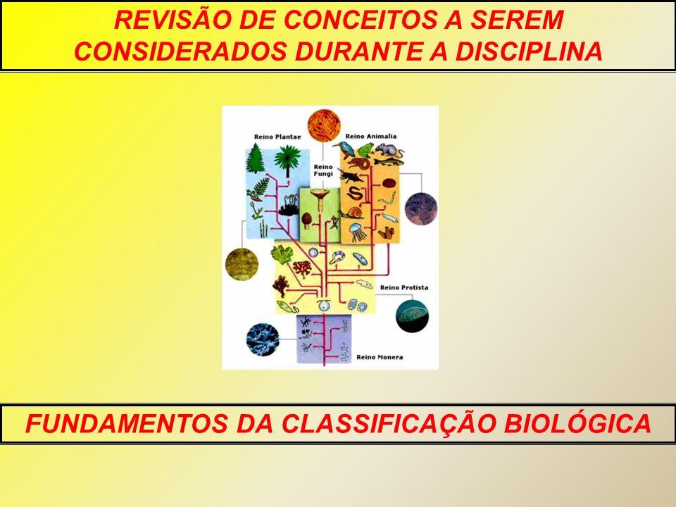Algas verdes (grupo externo) Briófitas PteridófitasGimnospermasAngiospermas Gametângios revestidos por células estéreis Embrião retido no gametângio feminino Vasos condutores de seiva Sementes Flores e frutos Espermatófitas (plantas que produzem sementes) Traqueófitas (plantas vasculares) Embriófitas