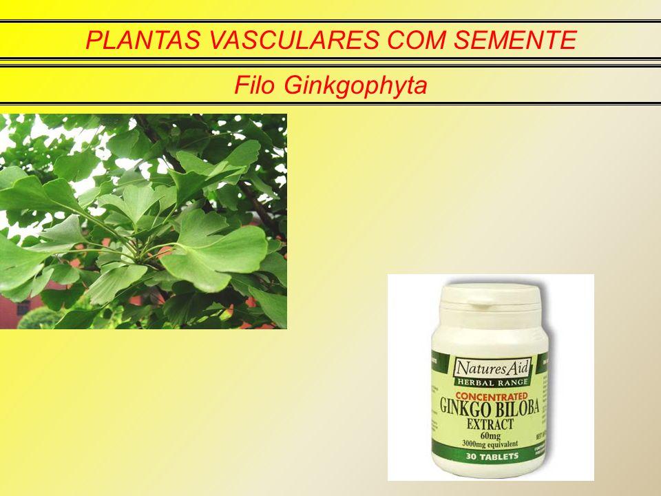PLANTAS VASCULARES COM SEMENTE Filo Ginkgophyta