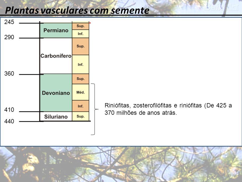 Plantas vasculares com semente 245 360 410 440 290 Riniófitas, zosterofilófitas e riniófitas (De 425 a 370 milhões de anos atrás.