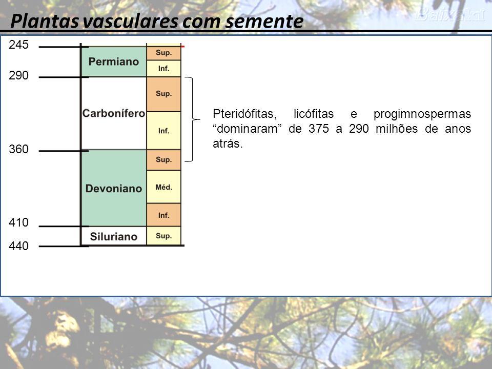 Plantas vasculares com semente 245 360 410 440 290 Pteridófitas, licófitas e progimnospermas dominaram de 375 a 290 milhões de anos atrás.