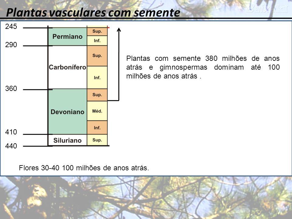 245 360 410 440 290 Plantas vasculares com semente Plantas com semente 380 milhões de anos atrás e gimnospermas dominam até 100 milhões de anos atrás.