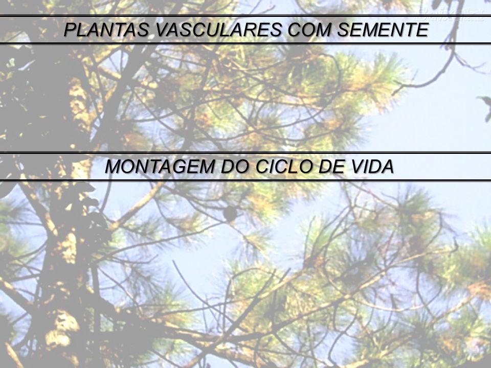 PLANTAS VASCULARES COM SEMENTE MONTAGEM DO CICLO DE VIDA