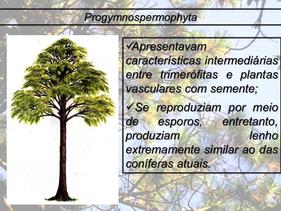 Progymnospermophyta Apresentavam características intermediárias entre trimerófitas e plantas vasculares com semente; Apresentavam características inte