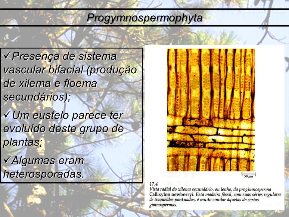 Progymnospermophyta Presença de sistema vascular bifacial (produção de xilema e floema secundários); Presença de sistema vascular bifacial (produção d
