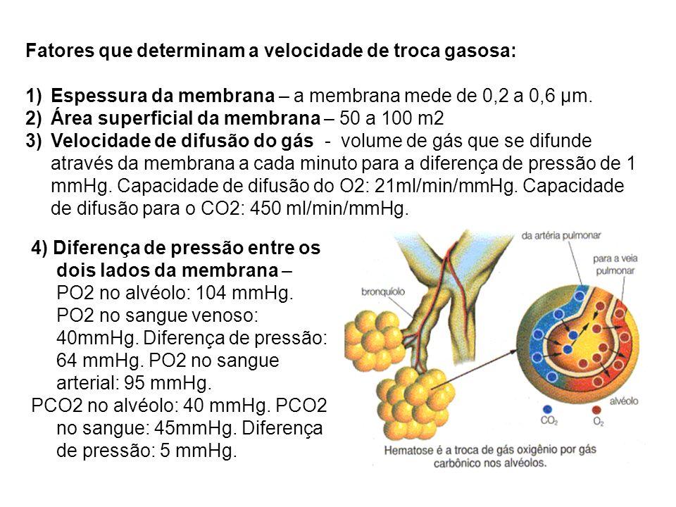 Fatores que determinam a velocidade de troca gasosa: 1)Espessura da membrana – a membrana mede de 0,2 a 0,6 μm. 2)Área superficial da membrana – 50 a
