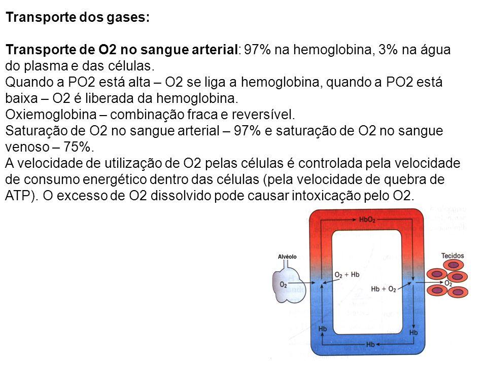 Transporte dos gases: Transporte de O2 no sangue arterial: 97% na hemoglobina, 3% na água do plasma e das células. Quando a PO2 está alta – O2 se liga