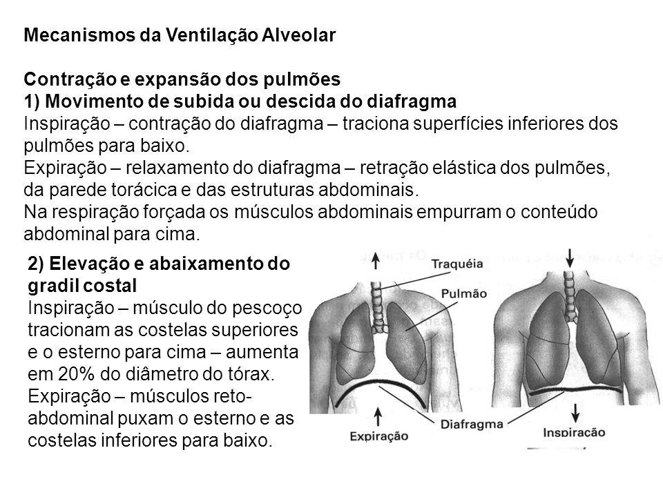 Mecanismos da Ventilação Alveolar Contração e expansão dos pulmões 1) Movimento de subida ou descida do diafragma Inspiração – contração do diafragma