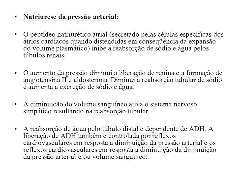 Natriurese da pressão arterial: O peptídeo natriurético atrial (secretado pelas células específicas dos átrios cardíacos quando distendidas em conseqü