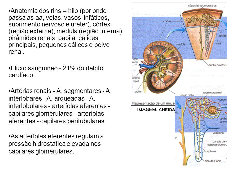 Anatomia dos rins – hilo (por onde passa as aa, veias, vasos linfáticos, suprimento nervoso e ureter), córtex (região externa), medula (região interna