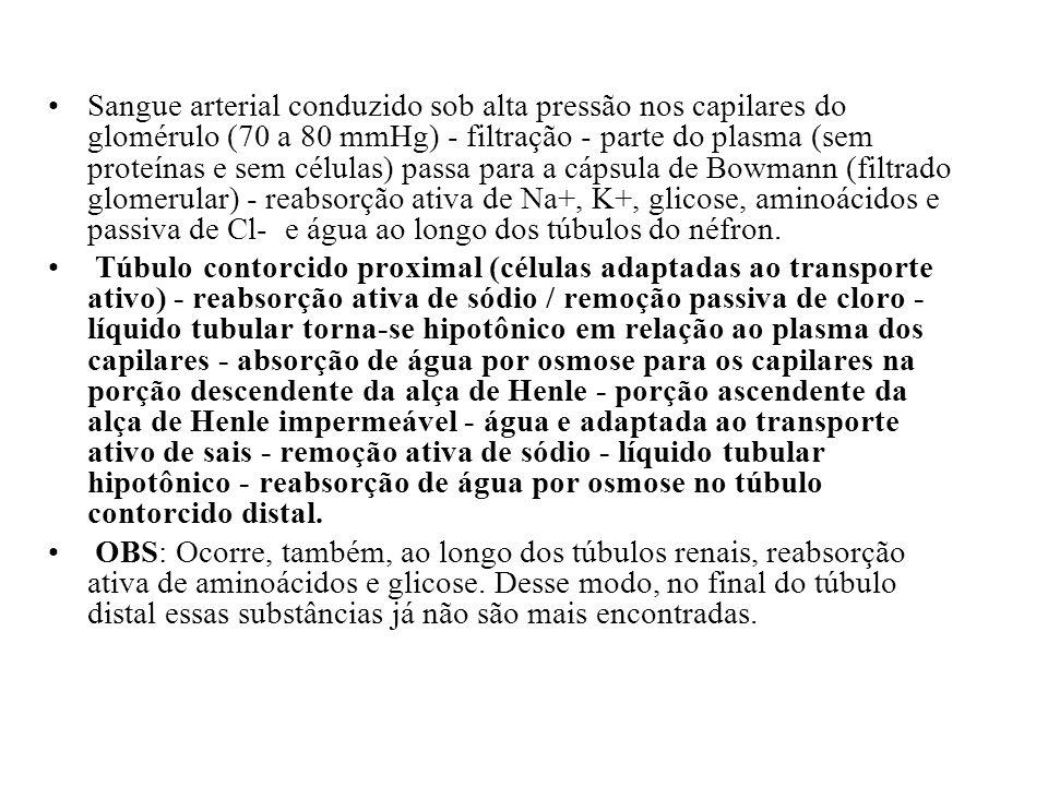 Hipotônico Isotônico Hipotônico Isotônico Hipertônico Motivos para o interstício medular renal ser hiperosmótico: transporte ativo de íons sódio, co-transporte de K, Cl e outros íons, difusão passiva de grandes quantidades de uréia, difusão de pouca quantidade de água.