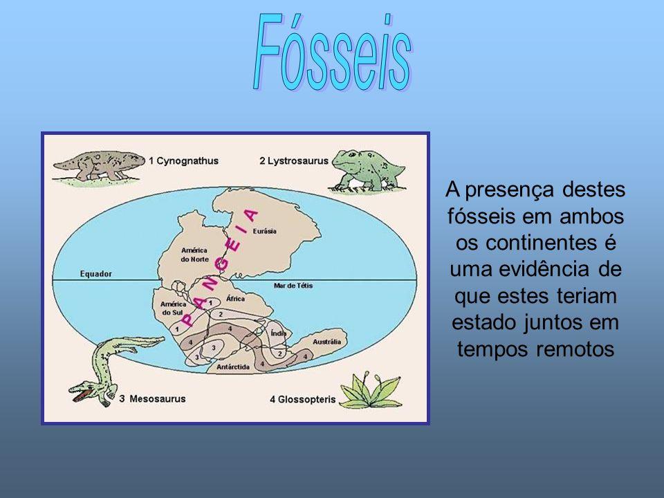 A presença destes fósseis em ambos os continentes é uma evidência de que estes teriam estado juntos em tempos remotos