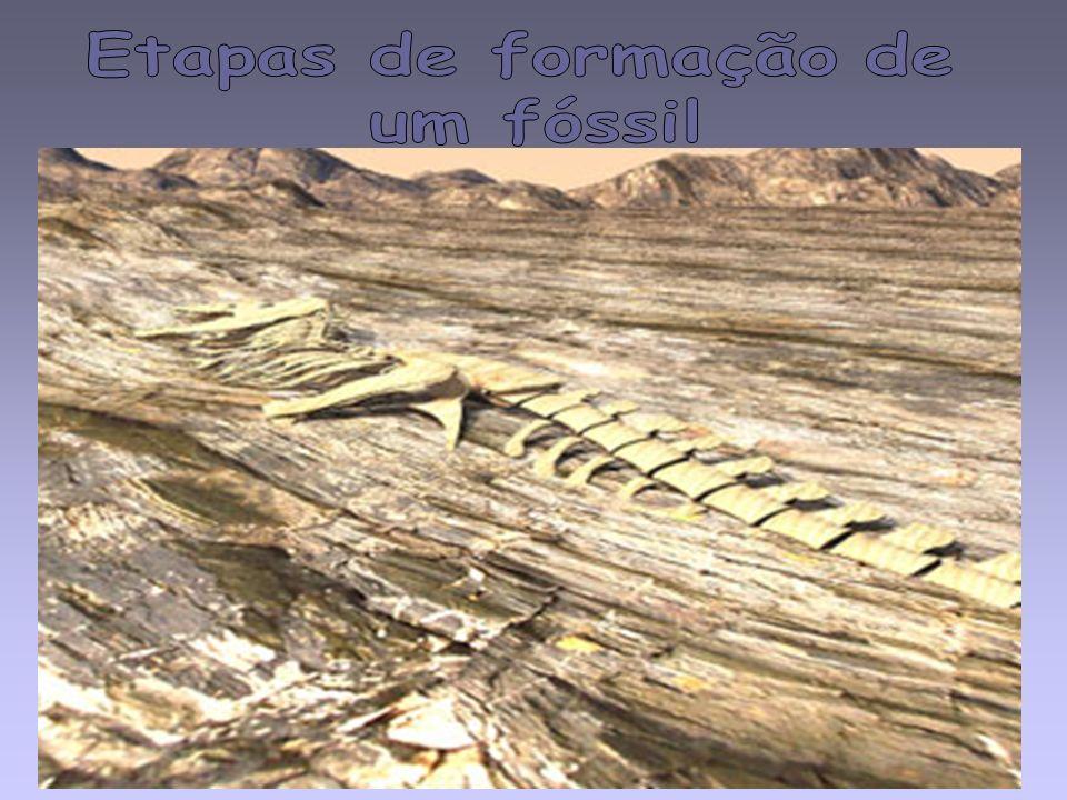 O que é um Fóssil? Quais as condições ideais para que ocorra a fossilização? Quais as informações que um fóssil nos pode dar? Resolve o exercício do l