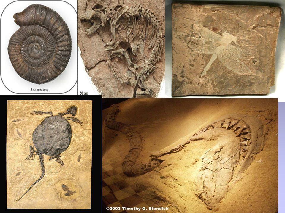 O Princípio da Identidade Paleontológica diz que estratos que contenham o mesmo conjunto de fósseis têm a mesma idade.