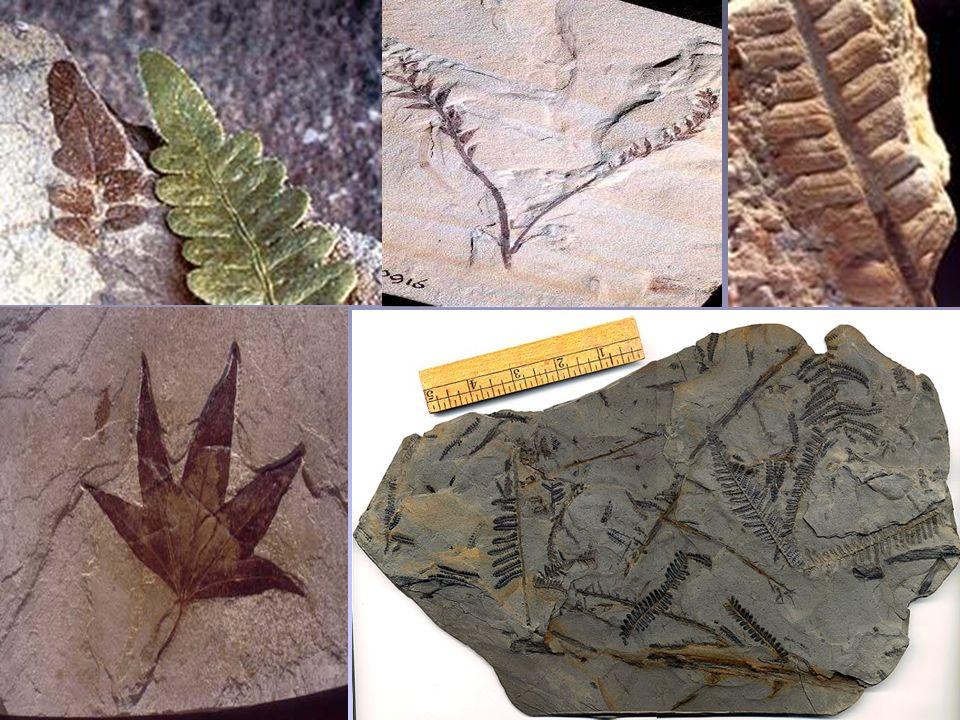 O que é um Fóssil.