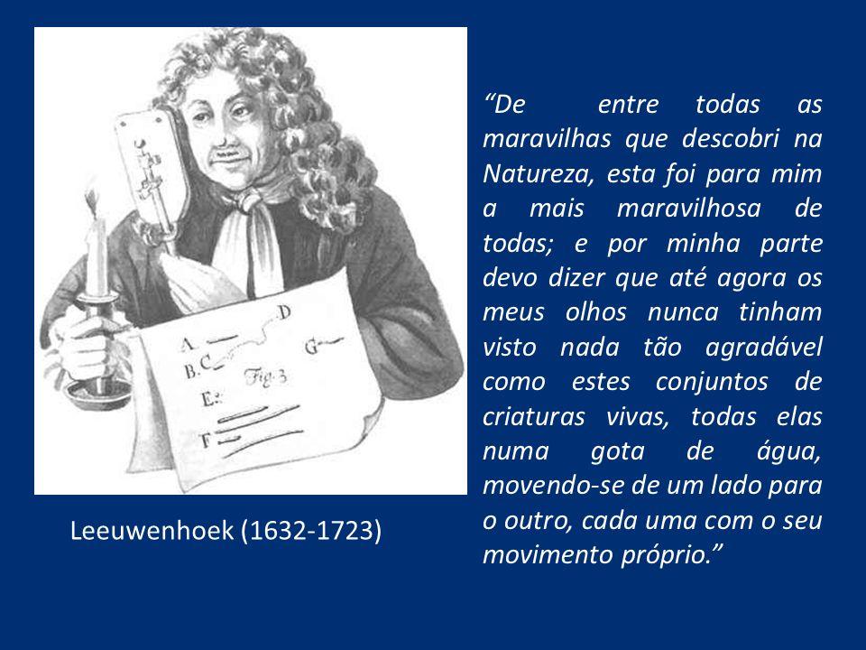 Leeuwenhoek (1632-1723) De entre todas as maravilhas que descobri na Natureza, esta foi para mim a mais maravilhosa de todas; e por minha parte devo d
