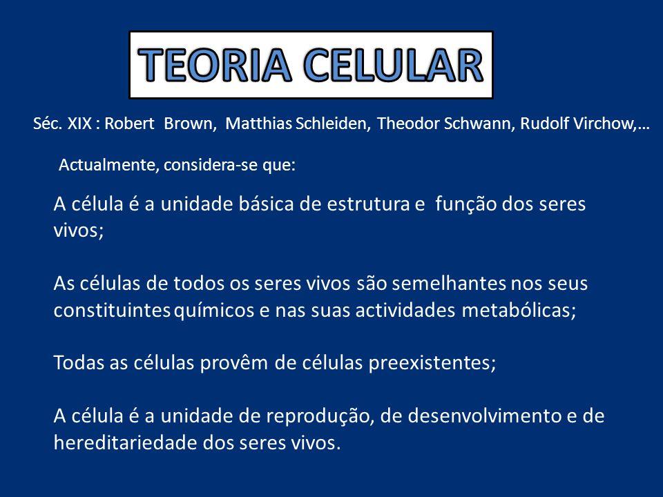Séc. XIX : Robert Brown, Matthias Schleiden, Theodor Schwann, Rudolf Virchow,… Actualmente, considera-se que: A célula é a unidade básica de estrutura