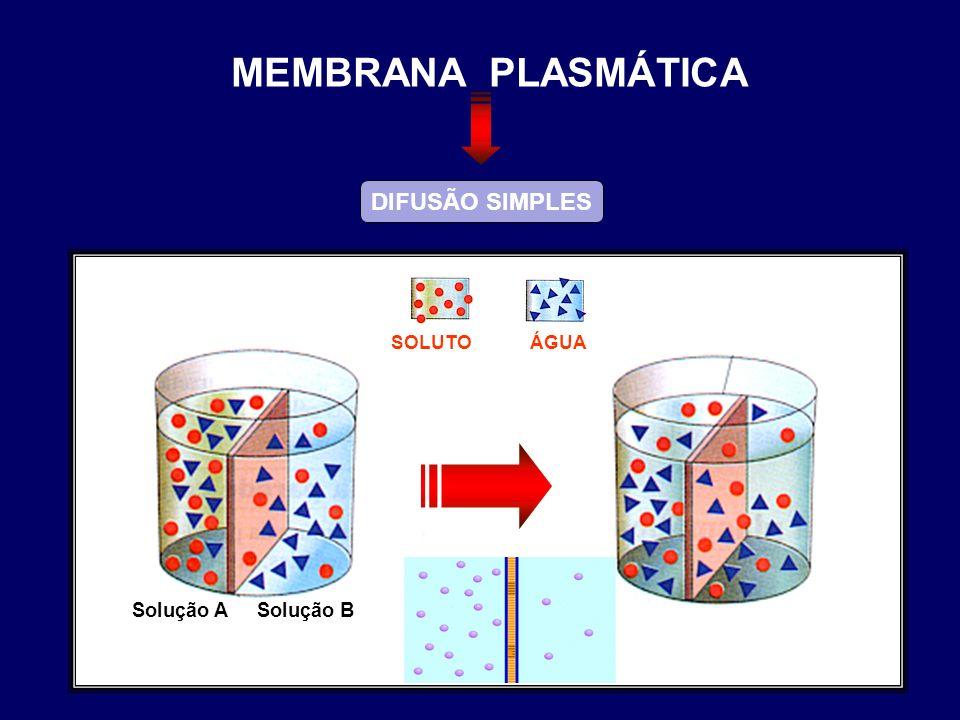 DIFUSÃO SIMPLES ÁGUASOLUTO Solução ASolução B MEMBRANA PLASMÁTICA