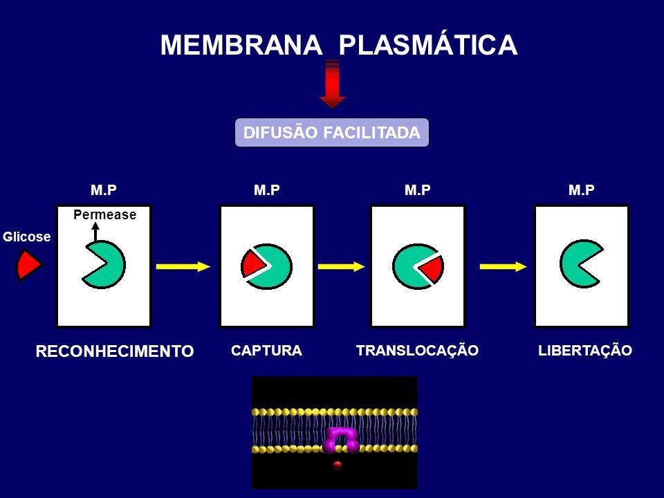 CAPTURA M.P Glicose M.P Permease M.P TRANSLOCAÇÃO M.P LIBERTAÇÃO RECONHECIMENTO DIFUSÃO FACILITADA MEMBRANA PLASMÁTICA