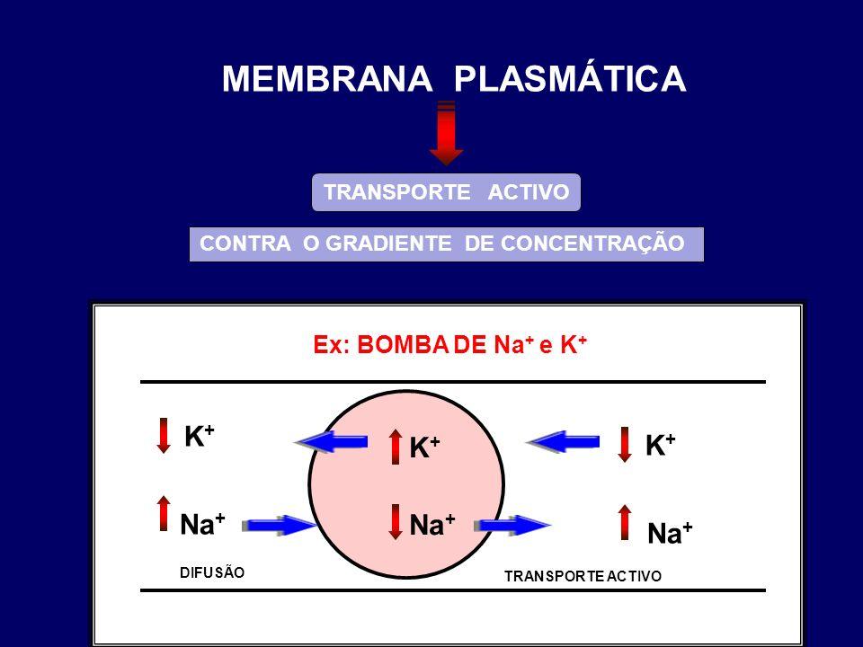 Ex: BOMBA DE Na + e K + TRANSPORTE ACTIVO CONTRA O GRADIENTE DE CONCENTRAÇÃO K+K+ Na + K+K+ K+K+ DIFUSÃO TRANSPORTE ACTIVO MEMBRANA PLASMÁTICA