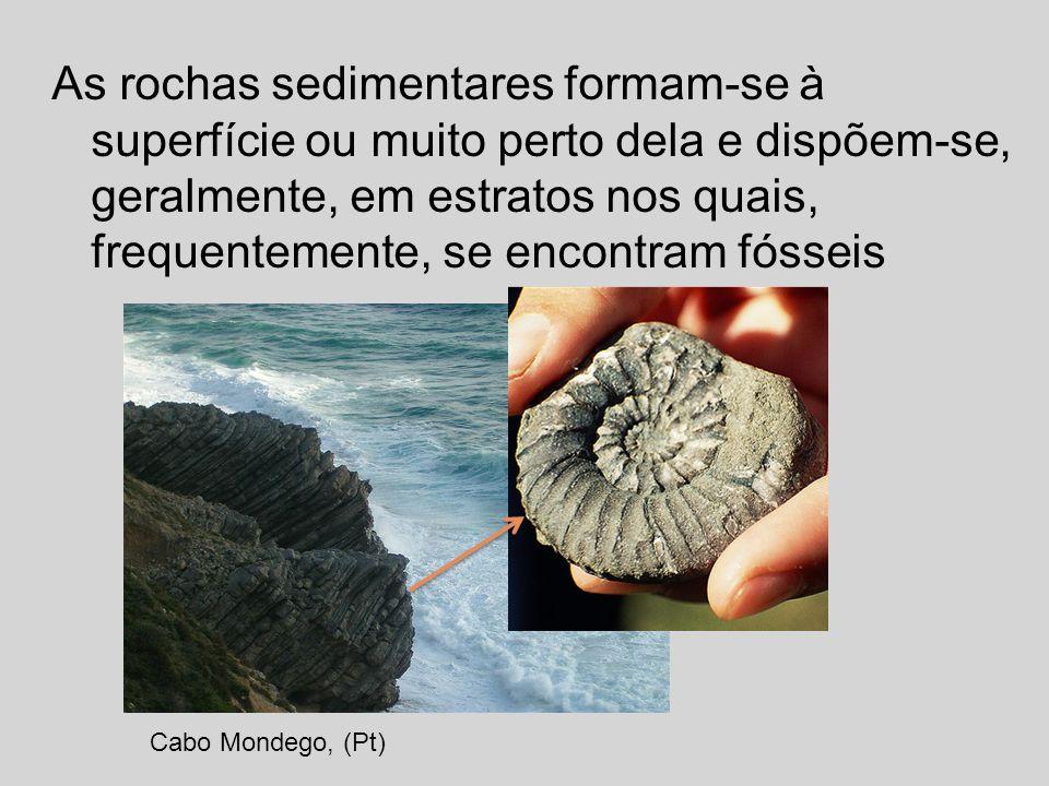 As rochas sedimentares formam-se à superfície ou muito perto dela e dispõem-se, geralmente, em estratos nos quais, frequentemente, se encontram fóssei