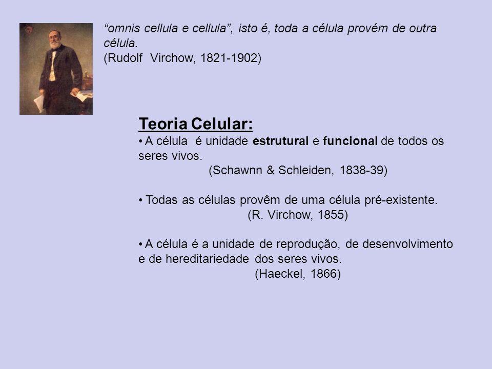 omnis cellula e cellula, isto é, toda a célula provém de outra célula. (Rudolf Virchow, 1821-1902) Teoria Celular: A célula é unidade estrutural e fun