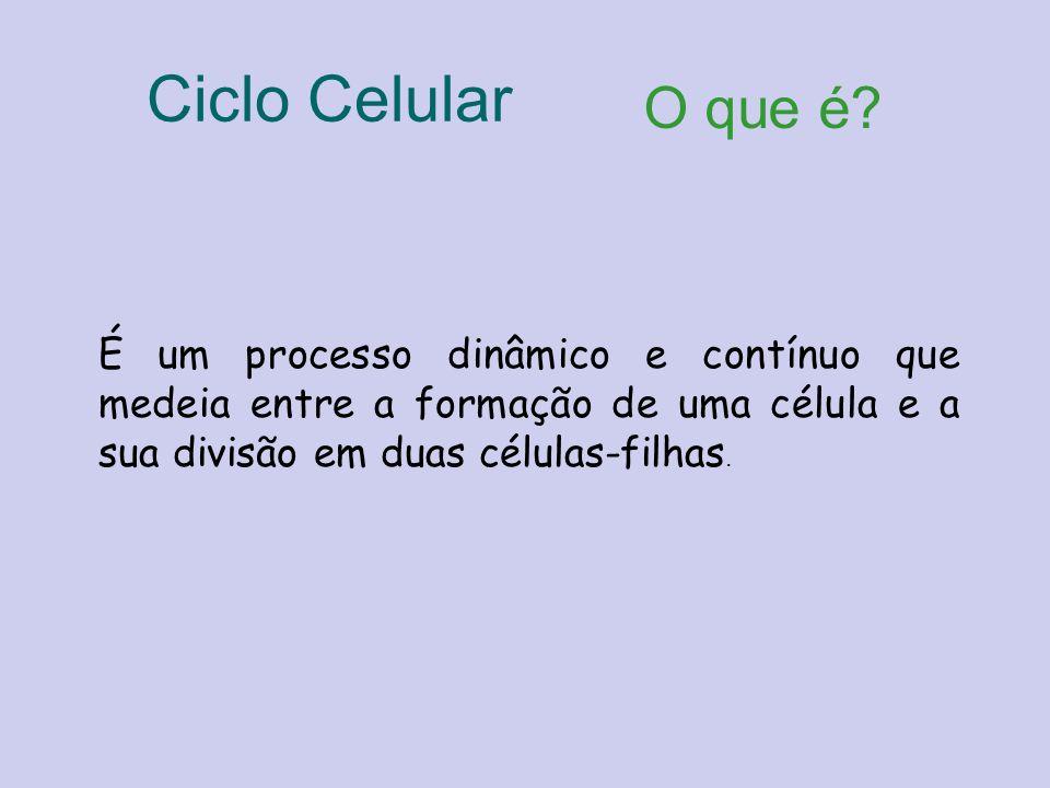 O que é? É um processo dinâmico e contínuo que medeia entre a formação de uma célula e a sua divisão em duas células-filhas. Ciclo Celular