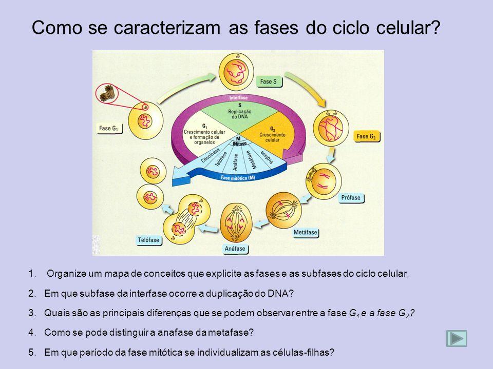Como se caracterizam as fases do ciclo celular? 1.Organize um mapa de conceitos que explicite as fases e as subfases do ciclo celular. 2. Em que subfa