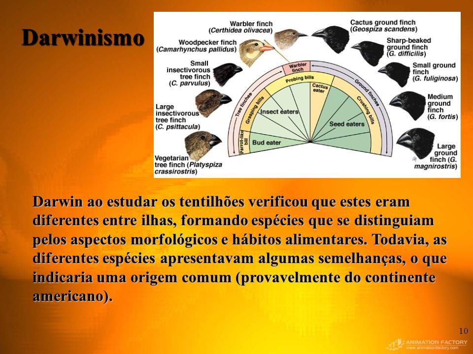 10 Darwin ao estudar os tentilhões verificou que estes eram diferentes entre ilhas, formando espécies que se distinguiam pelos aspectos morfológicos e hábitos alimentares.