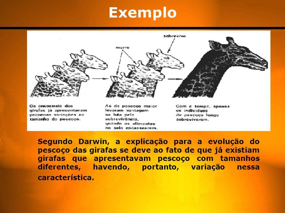 Exemplo Segundo Darwin, a explicação para a evolução do pescoço das girafas se deve ao fato de que já existiam girafas que apresentavam pescoço com tamanhos diferentes, havendo, portanto, variação nessa característica.