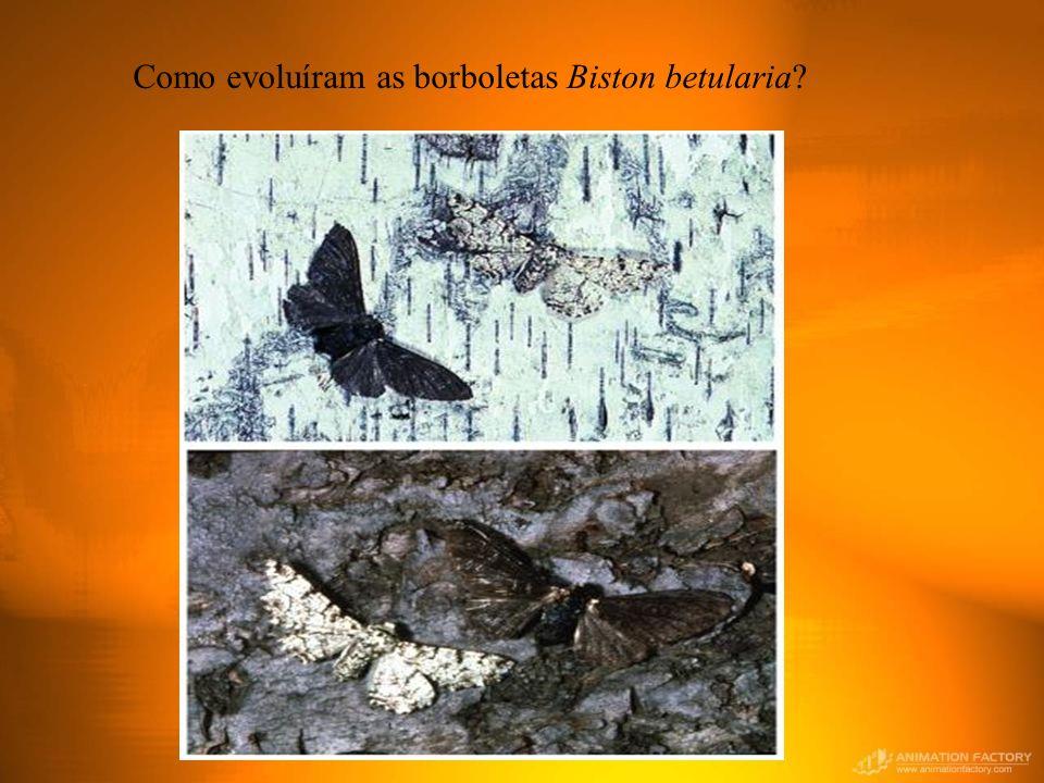 Como evoluíram as borboletas Biston betularia?