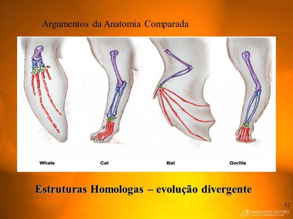 A 32 Estruturas Homologas – evolução divergente Argumentos da Anatomia Comparada