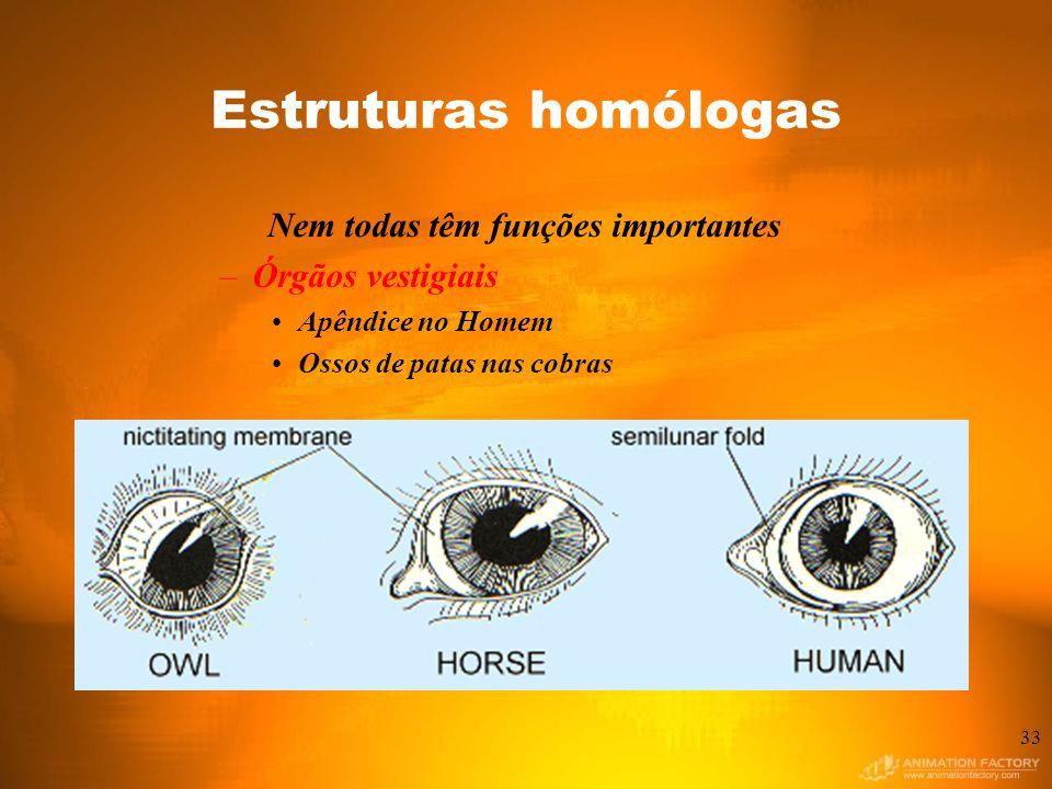 Estruturas homólogas Nem todas têm funções importantes –Órgãos vestigiais Apêndice no Homem Ossos de patas nas cobras 33
