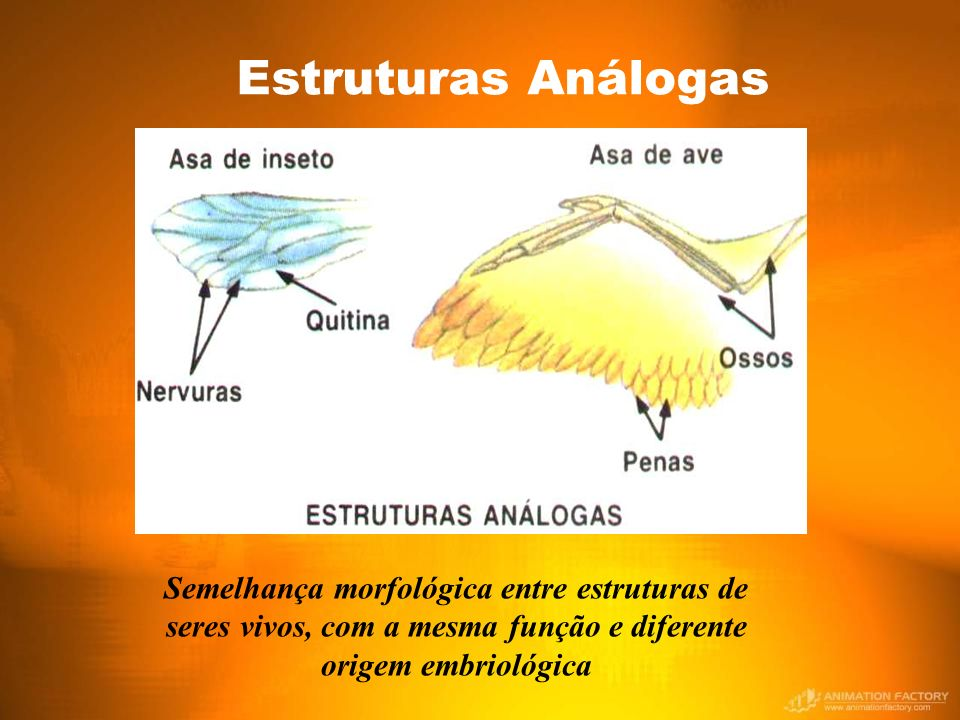 Estruturas Análogas Semelhança morfológica entre estruturas de seres vivos, com a mesma função e diferente origem embriológica