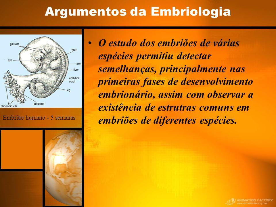 Argumentos da Embriologia O estudo dos embriões de várias espécies permitiu detectar semelhanças, principalmente nas primeiras fases de desenvolvimento embrionário, assim com observar a existência de estrutras comuns em embriões de diferentes espécies.