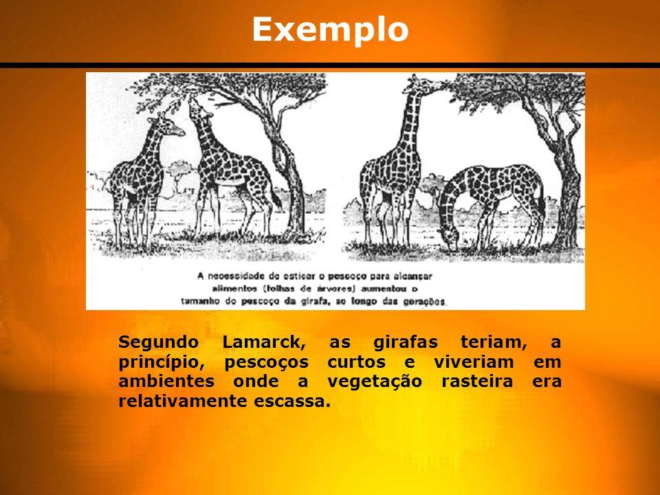 Modelo evolutivo segundo Lamarck O mecanismo Lamarckista de evolução ocorre ao longo de diferentes etapas: -As alterações do meio promovem no indivíduo a necessidade de se adaptar.