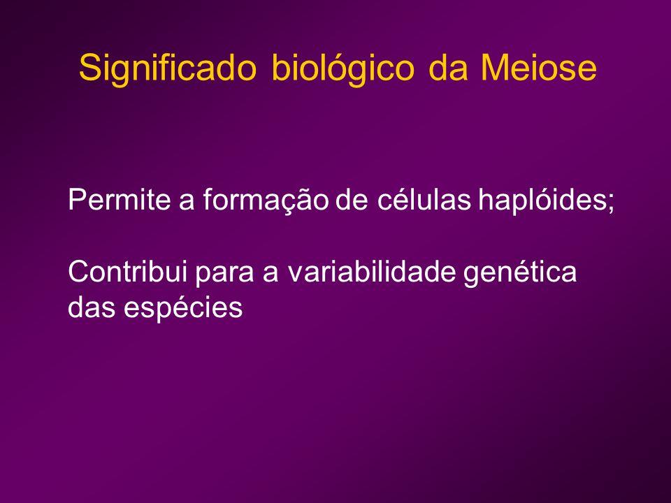 Como varia a quantidade de DNA ao longo da Meiose?
