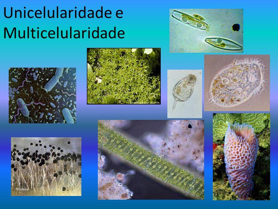 Unicelularidade e Multicelularidade