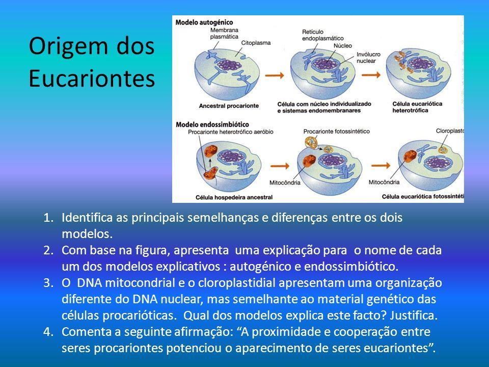 Origem dos Eucariontes 1.Identifica as principais semelhanças e diferenças entre os dois modelos. 2.Com base na figura, apresenta uma explicação para