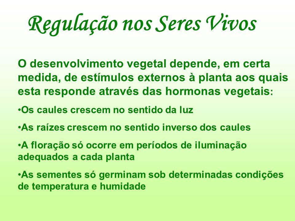 Regulação nos Seres Vivos O desenvolvimento vegetal depende, em certa medida, de estímulos externos à planta aos quais esta responde através das hormo