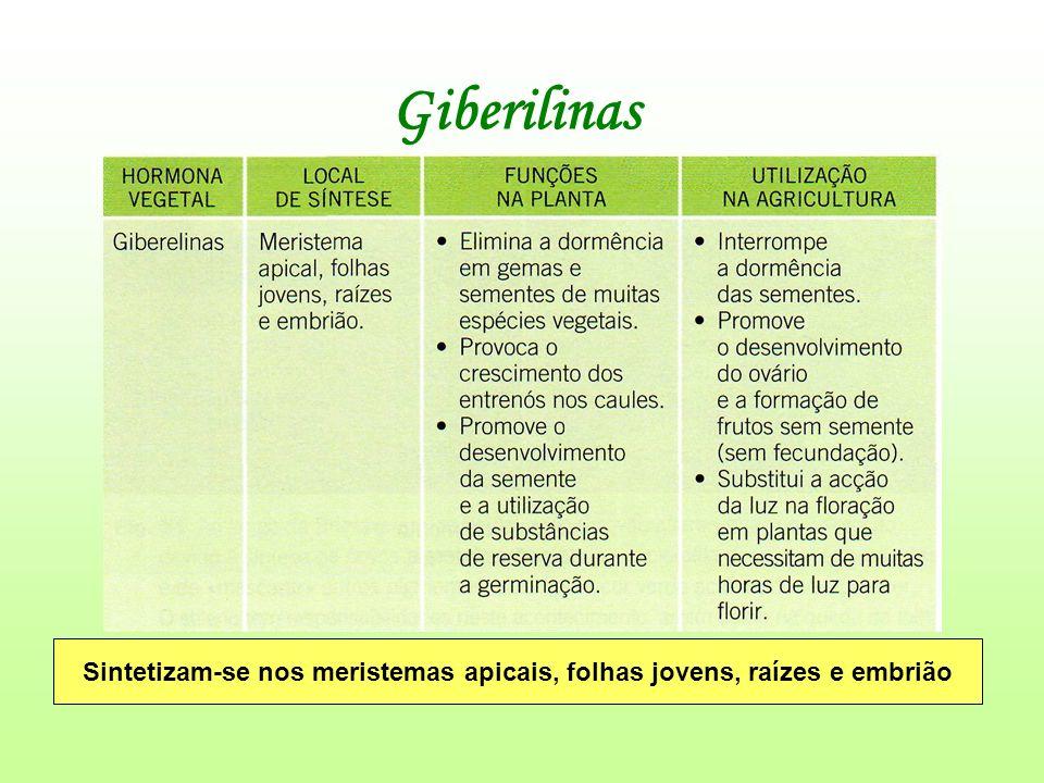 Giberilinas Sintetizam-se nos meristemas apicais, folhas jovens, raízes e embrião