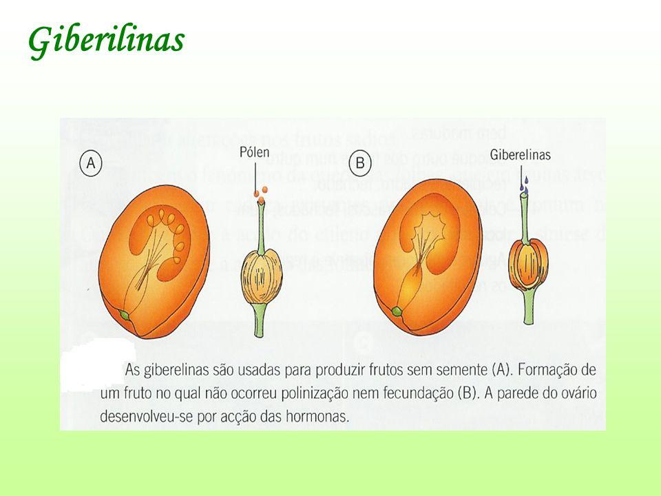Giberilinas