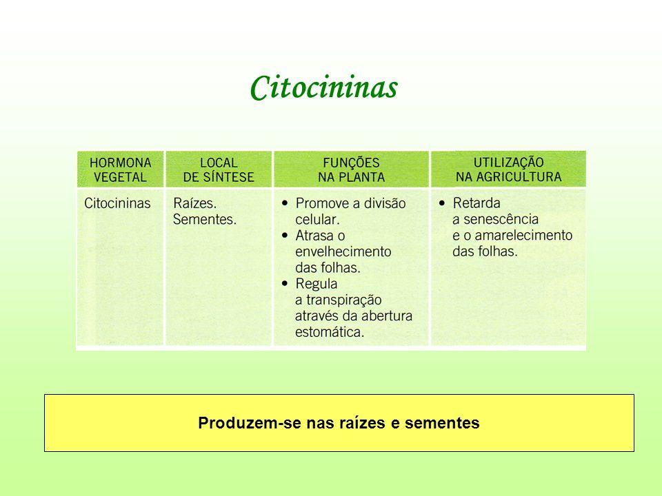 Citocininas Produzem-se nas raízes e sementes
