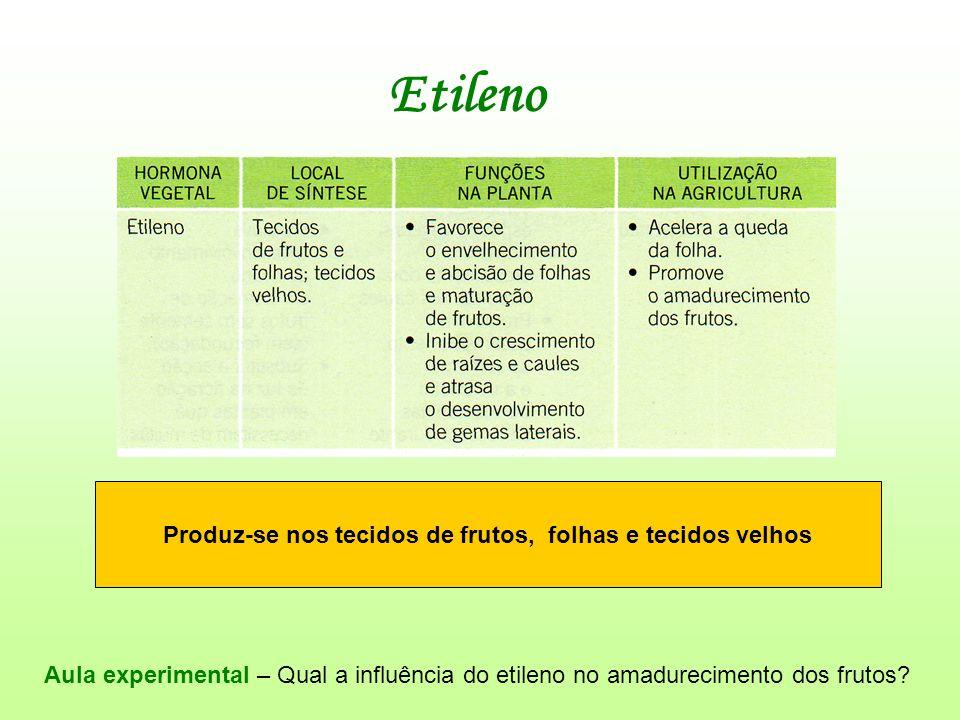 Etileno Produz-se nos tecidos de frutos, folhas e tecidos velhos Aula experimental – Qual a influência do etileno no amadurecimento dos frutos?