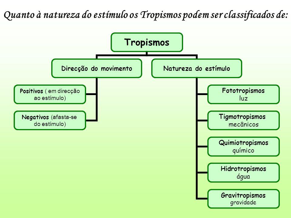 Quanto à natureza do estímulo os Tropismos podem ser classificados de: Tropismos Direcção do movimento Positivos ( em direcção ao estímulo) Negativos