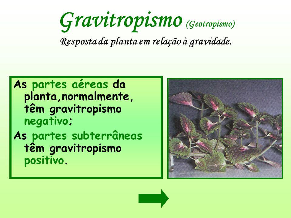 Gravitropismo (Geotropismo) Resposta da planta em relação à gravidade. As partes aéreas da planta,normalmente, têm gravitropismo negativo; As partes s
