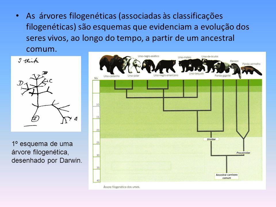 As árvores filogenéticas (associadas às classificações filogenéticas) são esquemas que evidenciam a evolução dos seres vivos, ao longo do tempo, a par
