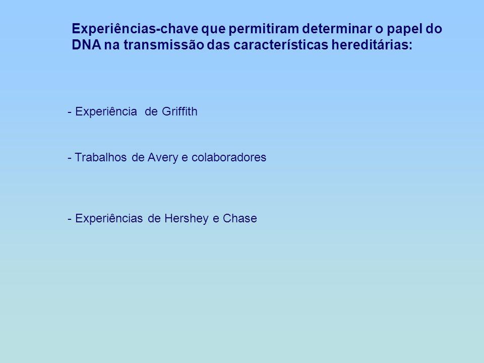 Experiências-chave que permitiram determinar o papel do DNA na transmissão das características hereditárias: - Experiência de Griffith - Trabalhos de