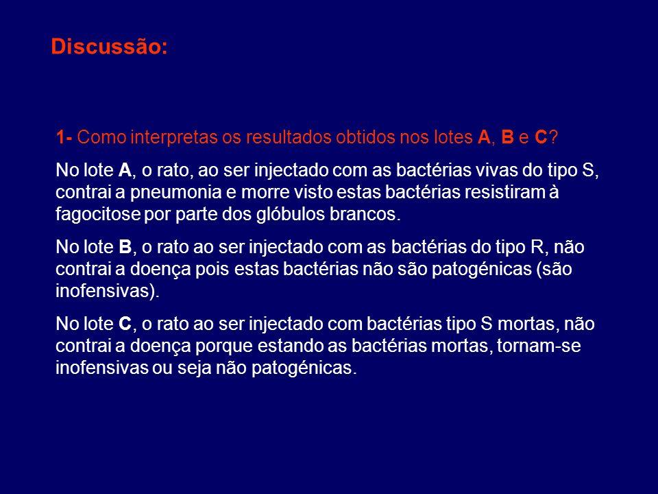 Discussão: 1- Como interpretas os resultados obtidos nos lotes A, B e C? No lote A, o rato, ao ser injectado com as bactérias vivas do tipo S, contrai